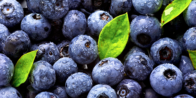 Blueberries stock
