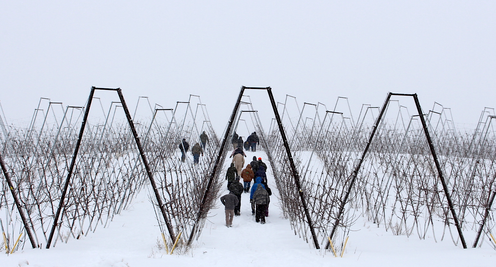 Photo of a brisk walk in a winter orchard