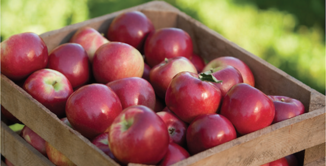 RubyFrost apples by Crunch Time